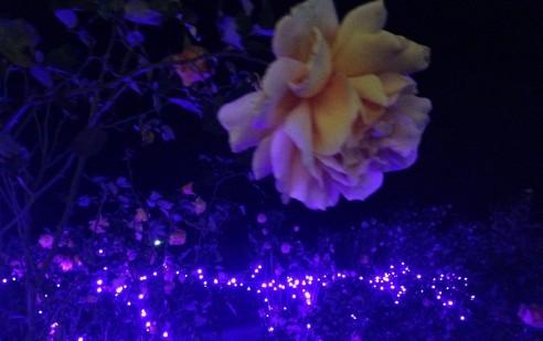 花とイルミネーション