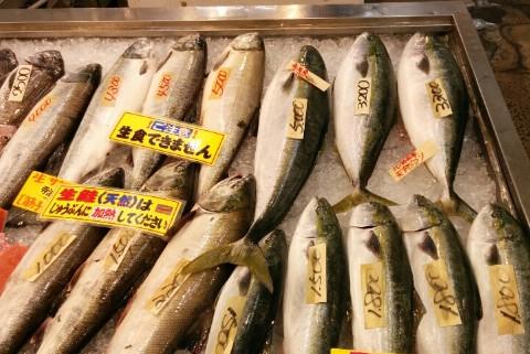 鮭やブリ、ワラサ