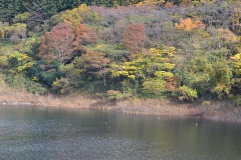 梅田湖の紅葉
