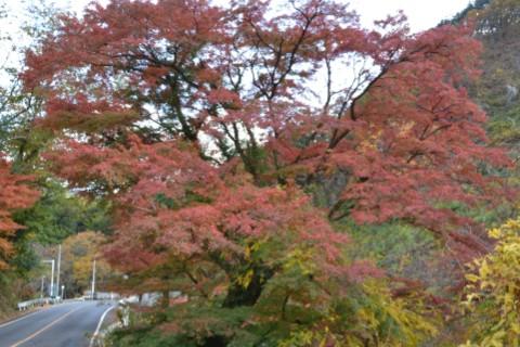 桐生川沿いの紅葉