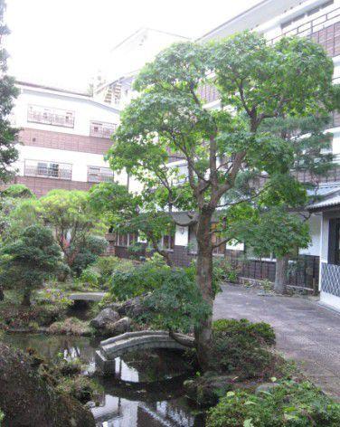 湯元四萬館の庭園の様子