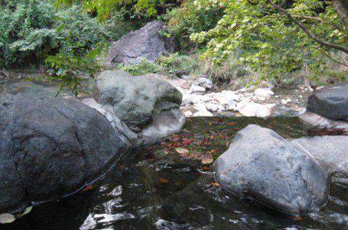 川に流れ込む温泉の様子