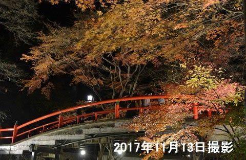 ライアップ紅葉の河鹿橋の様子