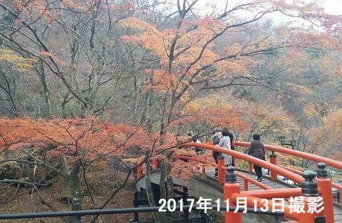 紅葉が終わる頃の河鹿橋の様子