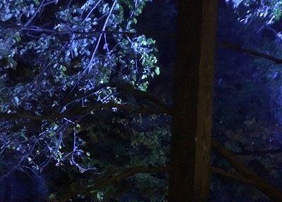 夜の露天風呂から見た景色
