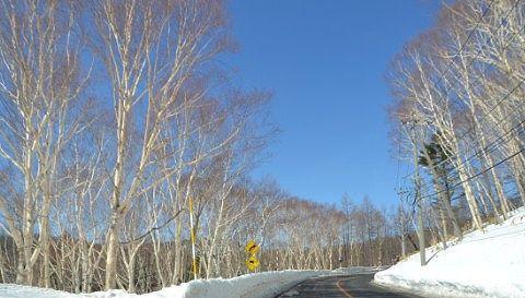 白樺の林の中を走る道路