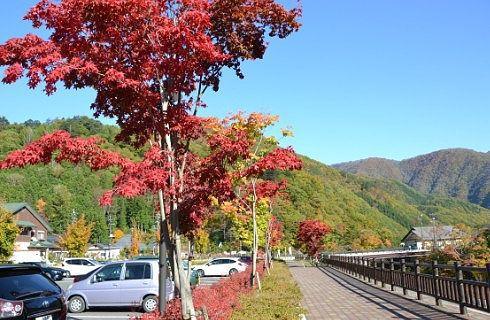 紅葉してた駐車場の周りの木々