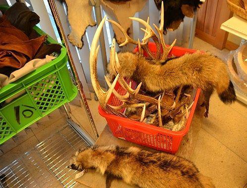 鹿の角とタヌキの毛皮