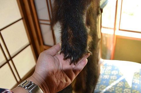 熊の毛皮の爪