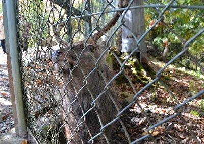 平家の里で鹿がいたエリア