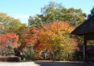 紅葉の平家の里の様子