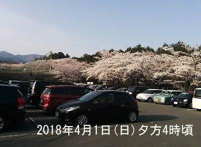 2018年4月1日赤城南面千本桜駐車場の様子