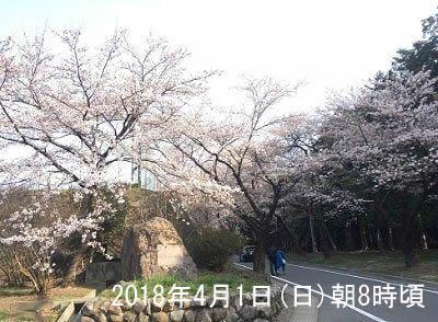 2018年4月1日赤城南面千本桜の下の開花の様子