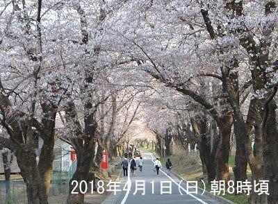 2018年4月1日赤城南面千本メイン会場近くの桜の様子