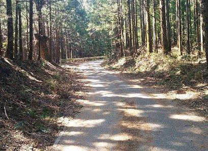 林道の様子1