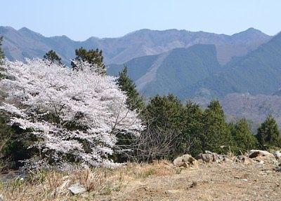 遊歩道から見た桜と遠くの山々の景色