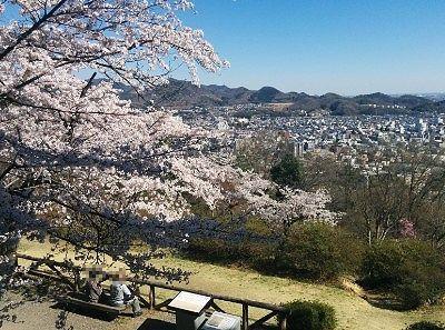 ベンチに座りながら桜と景色を楽しむ人たち