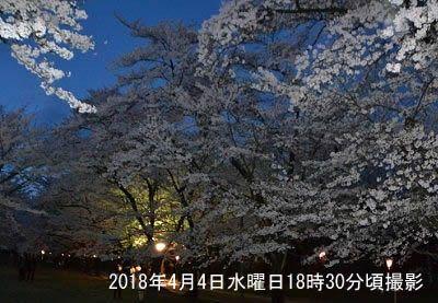 赤城南面千本桜まつり2018夜桜の様子