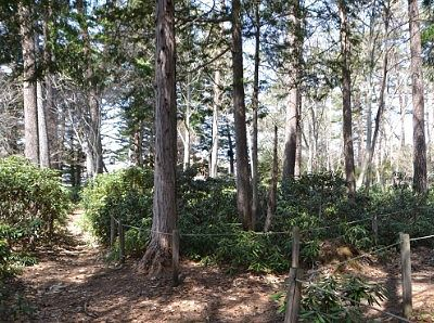 白根神社境内の森の様子