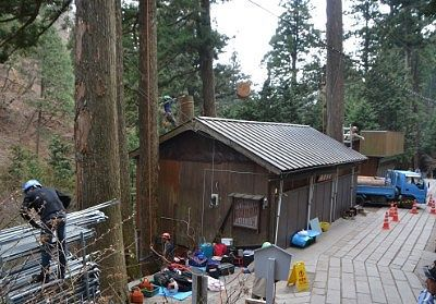 立木の伐採工事