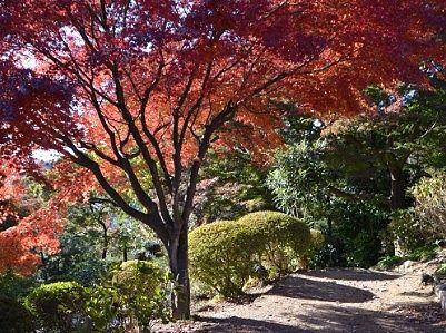 紅葉が美しかった遊歩道の様子
