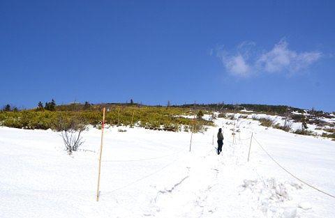 雪にうもってた登山道
