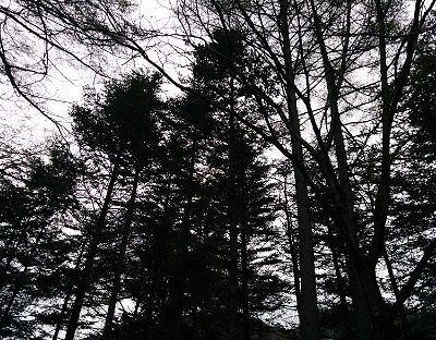 露天風呂から見えた森