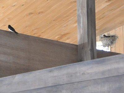 湯屋の中の燕の巣