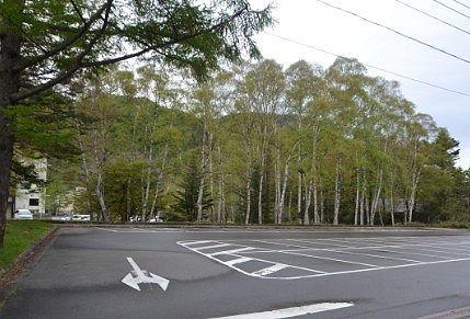 駐車場脇の白樺の様子