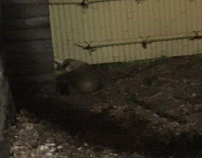露天風呂に現れた野生動物