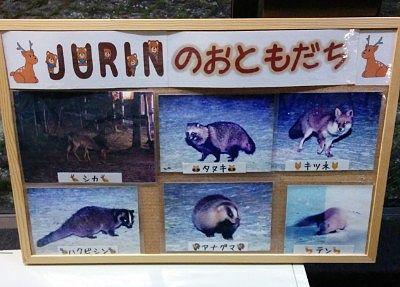 ホテルに現れた野生動物の数々の写真