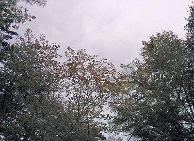 露天風呂の頭上の空の景色