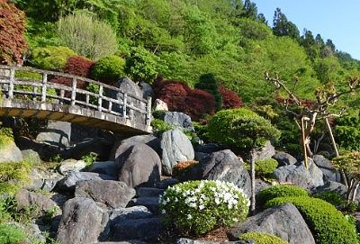 玄関前の日本庭園
