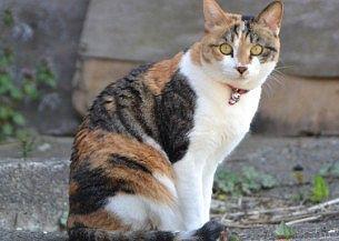 観光中見かけた猫
