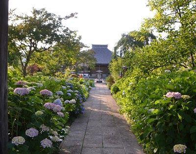 本堂へまっすぐ伸びる参道と両脇の紫陽花