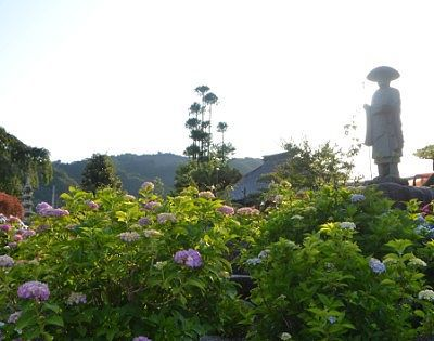 道元禅師と紫陽花