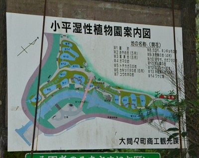 小平湿性植物園案内図