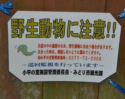 野生動物に注意