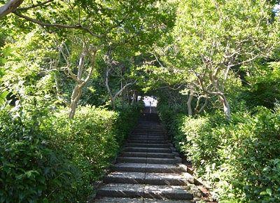 木々のトンネル風の参道の様子