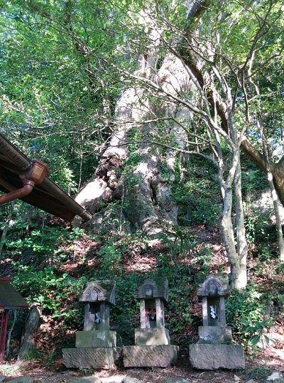 天然記念物のケヤキの木
