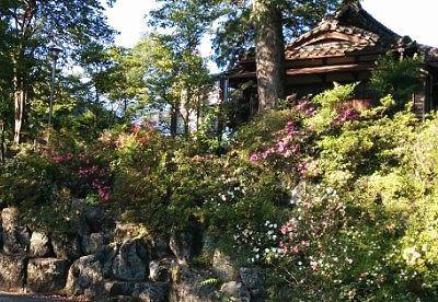 境内にあった石垣よ躑躅の花