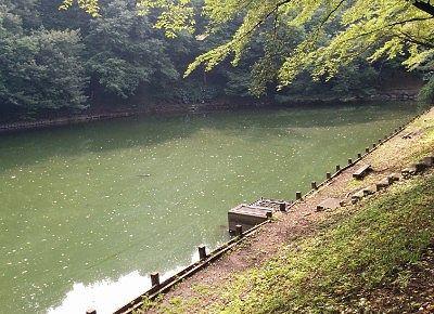 小野池の様子