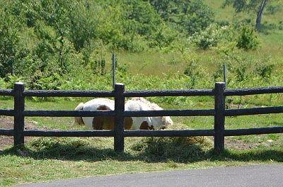 牧場内にいた馬