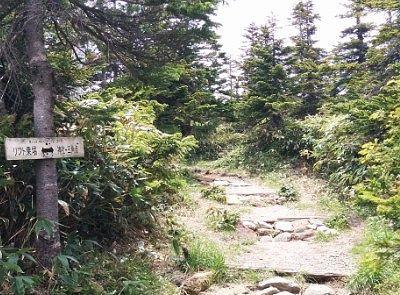 山頂に向かう遊歩道の様子