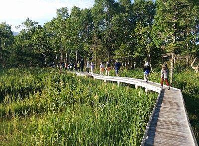 湿原の遊歩道の様子