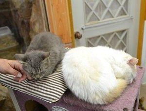 わんにゃんリビングでくつろいでた猫たち