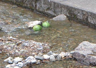 川でスイカを冷やしてるところ