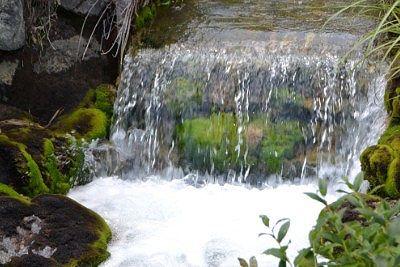 川の流れの早い場所にあったチャツボミゴケ