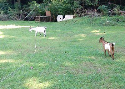 羊が放牧されてるところ