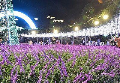 本物花のライトアップ